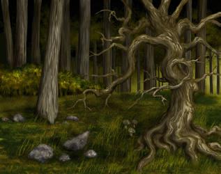 Forest by hwango