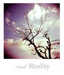 Surreal Reality