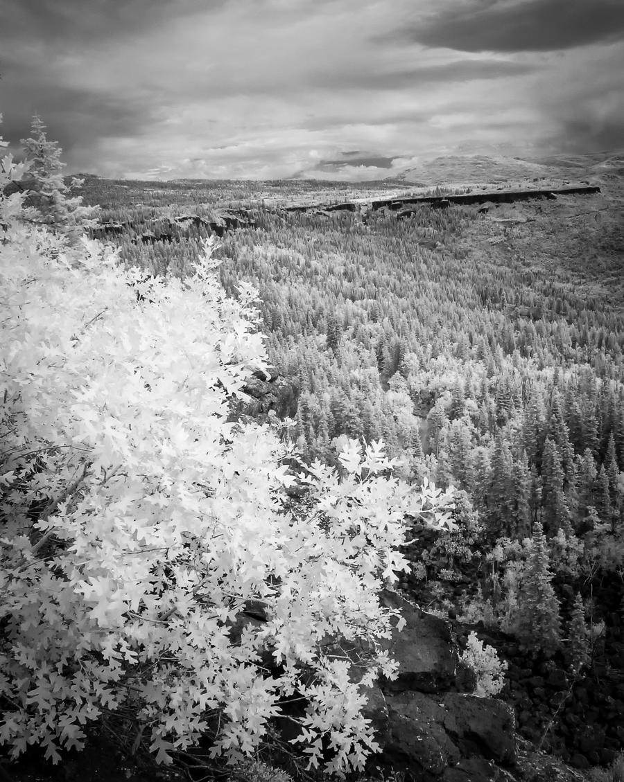 Looking North in Infrared by eprowe