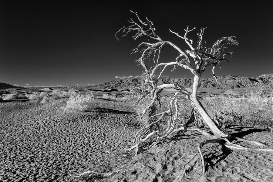 Ghosts of the Mesquite Flat Sand Dunes by eprowe