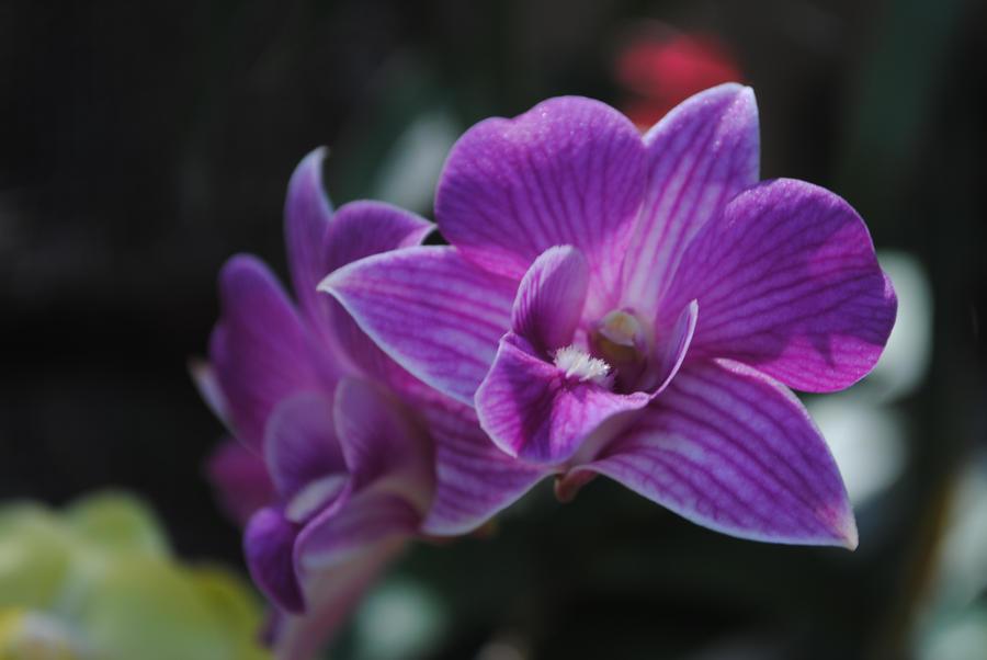 violet flower by jojo on deviantart, Beautiful flower