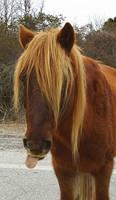 An Emo Horse