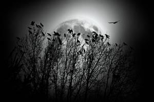 The Birds by VoidIndex
