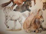 part of commission portrait of 6 horses