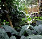 Jungle Stock 6
