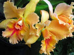 Orchid Stock 12