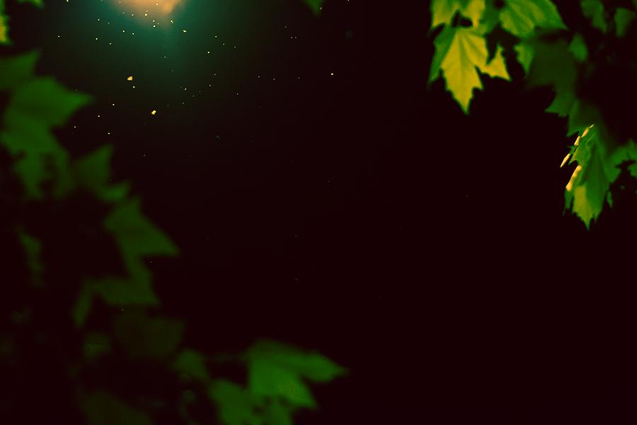 Neprisus by Bolv3rk