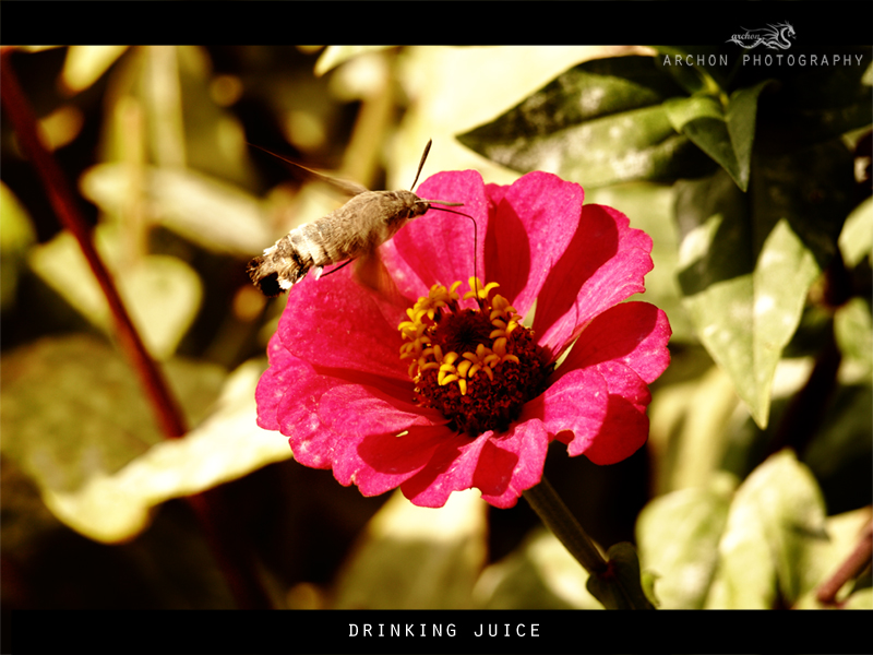 drinking juice by archonGX