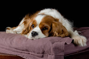 Sad dog by MaryEmilyJuly