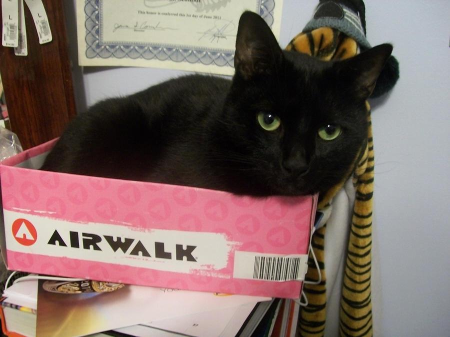 Cat in a Box by Artfanatic4life