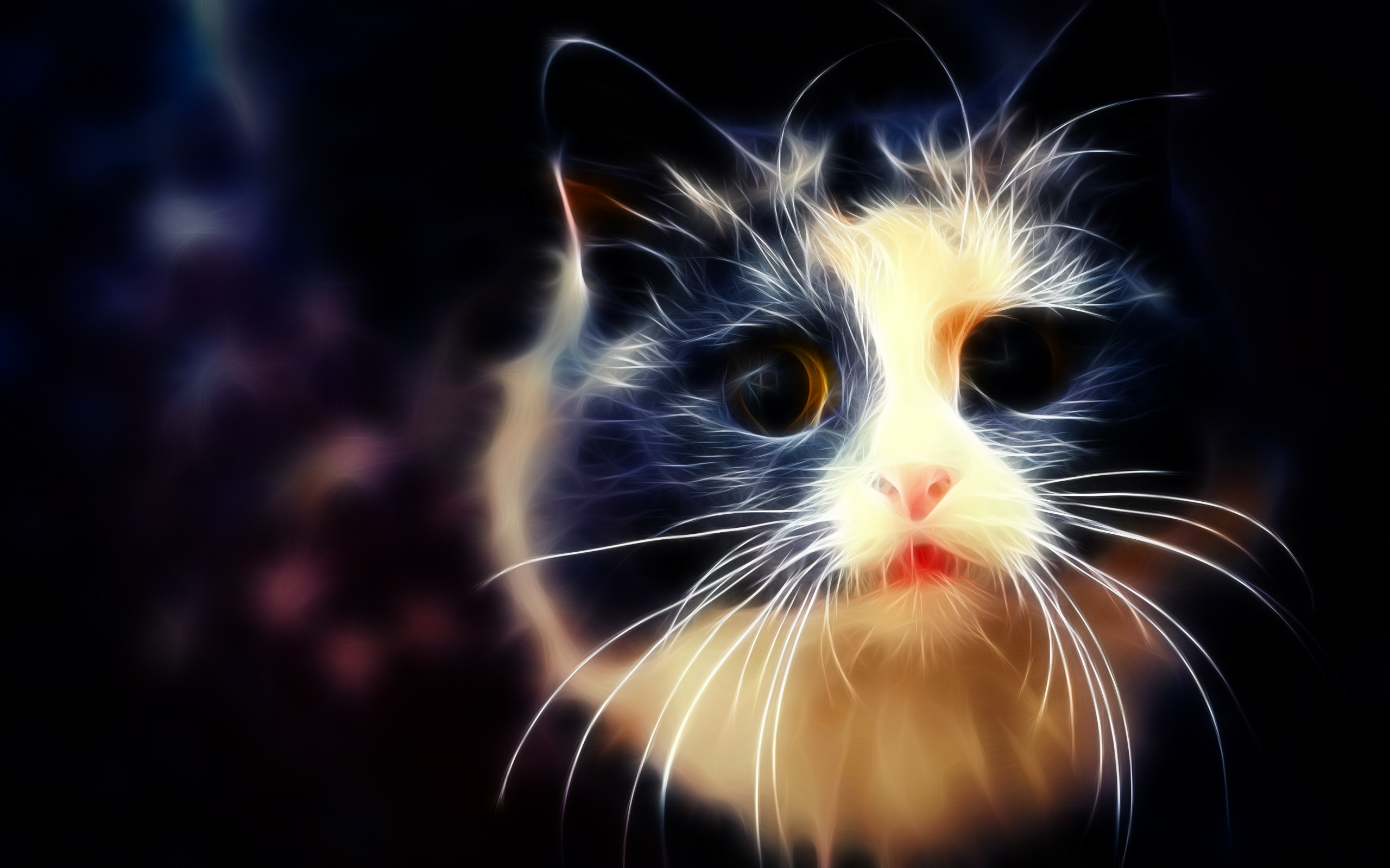 White And Black Cat Wallpaper By Ghostkyller On Deviantart