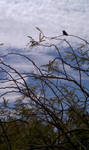 Hummingbird by the Roadside