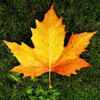Autumnal Flame
