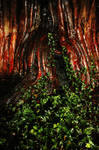 Ivy and Yew... by Earth-Hart