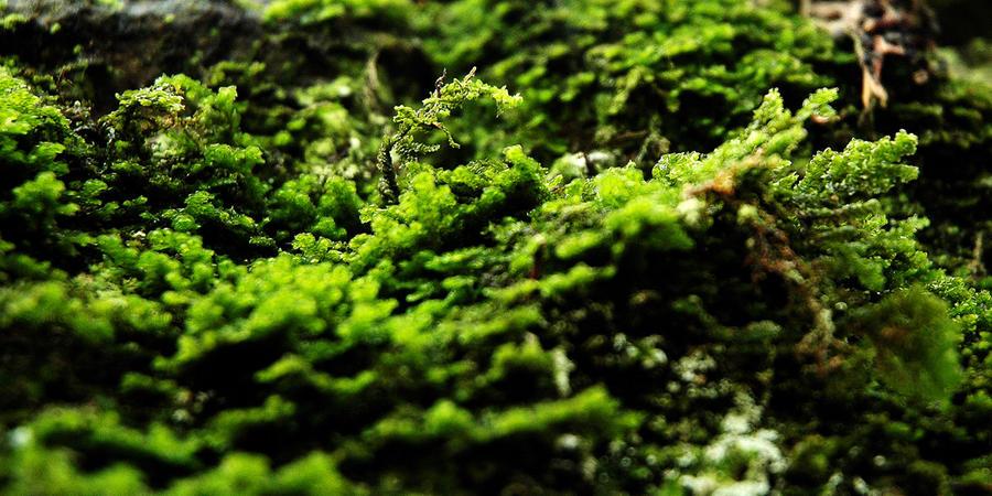 A Veritable Jungle... by EarthHart