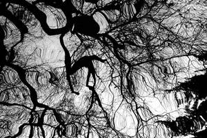 Weeping Willow Reflection by Earth-Hart