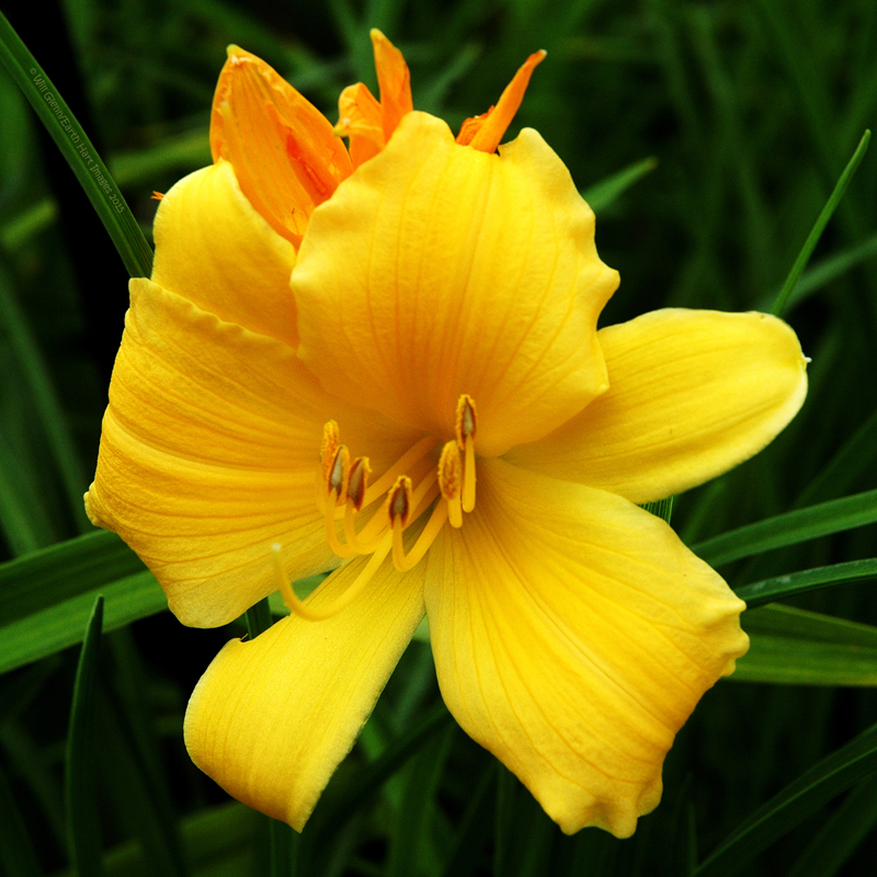 Happy Birth Day Lily by EarthHart