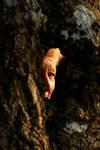 Autumn Ash Woman by Earth-Hart
