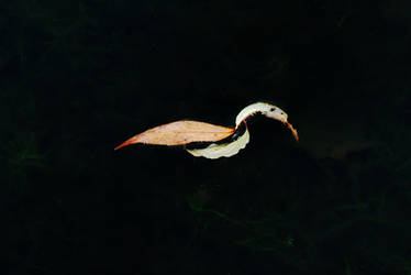Willow Leaf Swan by Earth-Hart