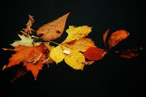 The Colour of a Season by Earth-Hart