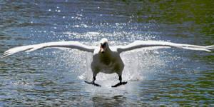 Wynn, Returning, Landing Gear Down