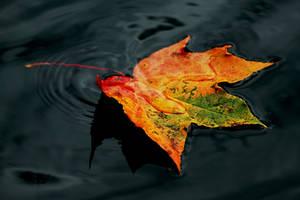 Fire Bird of Autumn by Earth-Hart