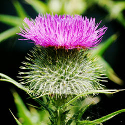 Scotland by Earth-Hart