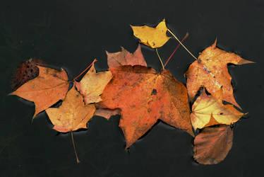 ZEN Autumn by Earth-Hart