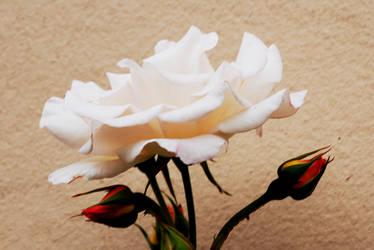 Alba Rosa by Earth-Hart