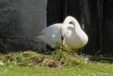 Cob Nest Building by Earth-Hart