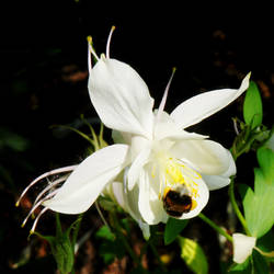 Doing The Columbine Bumble by Earth-Hart