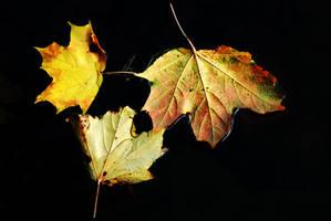 Trio Autumnus