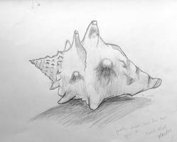 Conch Shell - initial sketch