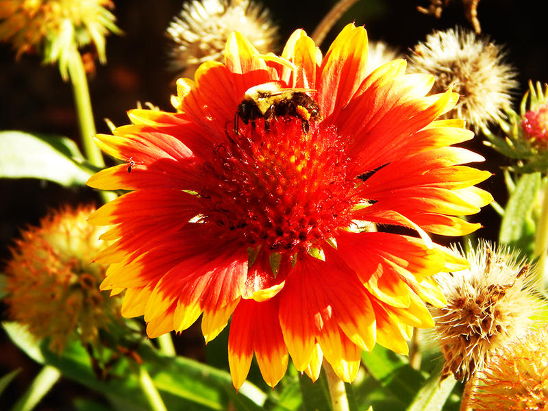 Nectar by ChaseStarlit