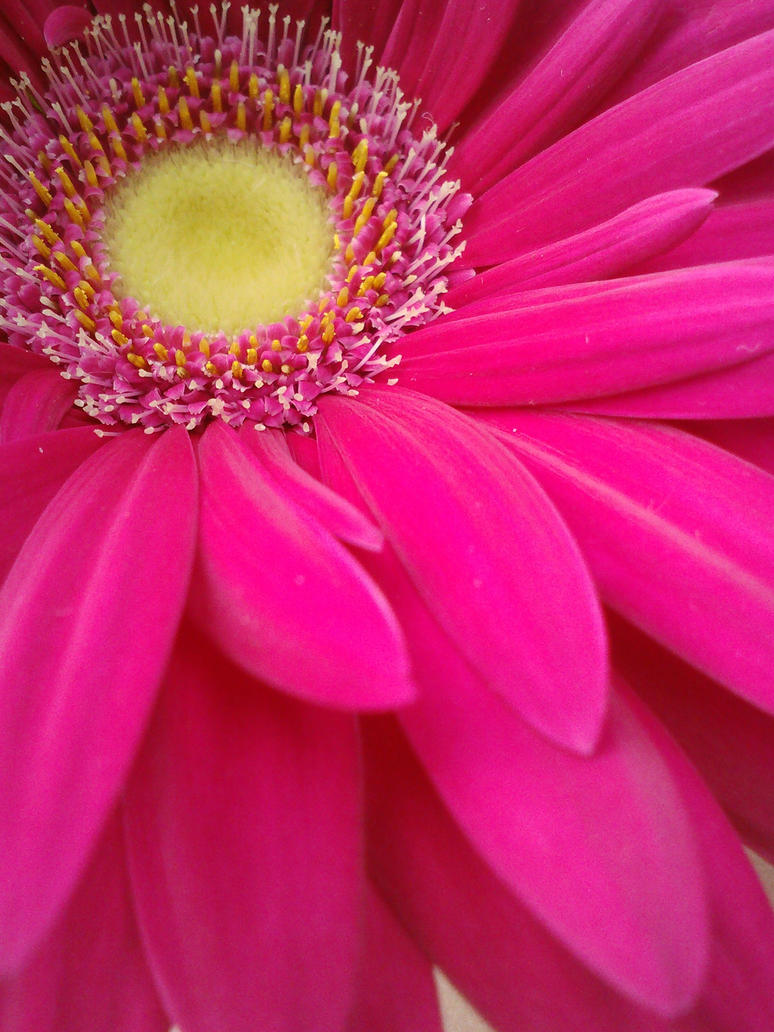 Pink Daisy4 by XStitchedxTogetherX