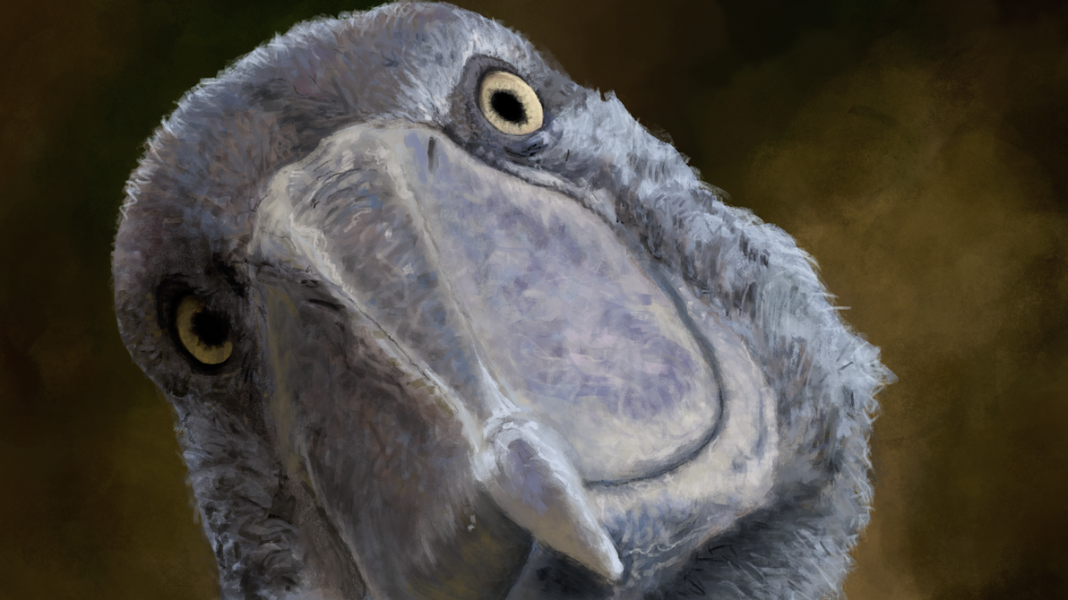 Digital Painting - Shoebill Stork Photo Study by ReloadUI
