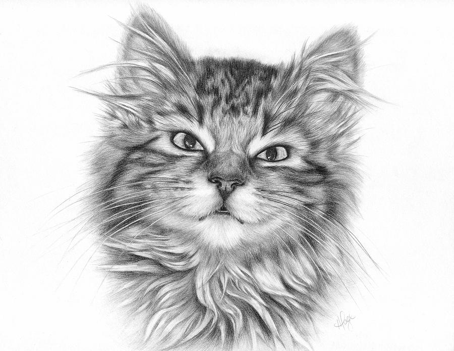 Anime Persain Cat