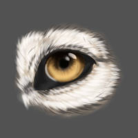 Wolf Eye by InsertCoolNameHere5