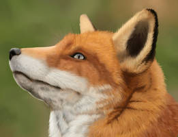 Fox Head by InsertCoolNameHere5