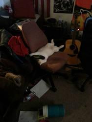 Mandatory cat pic by fmgecko