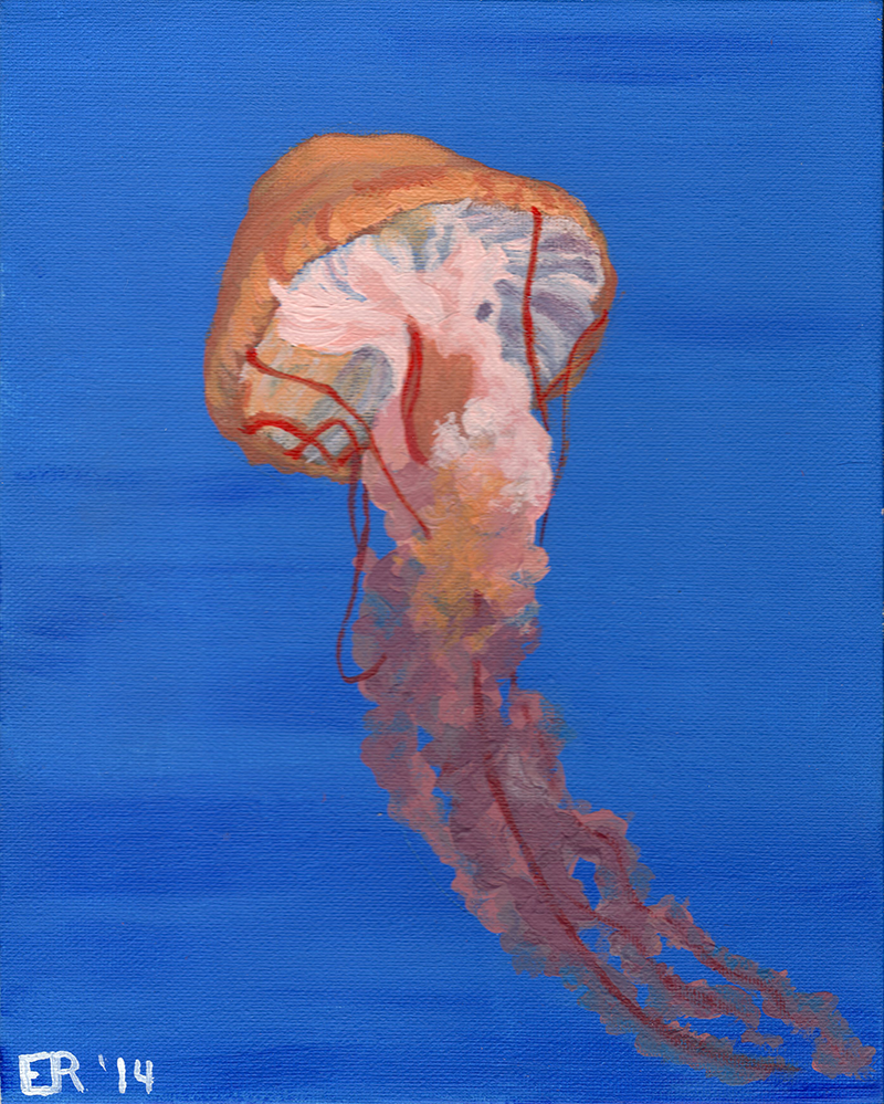 Jellyfish - Canvas by IslandWriter