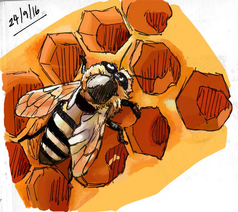 Sketch: Honey Bee by IslandWriter