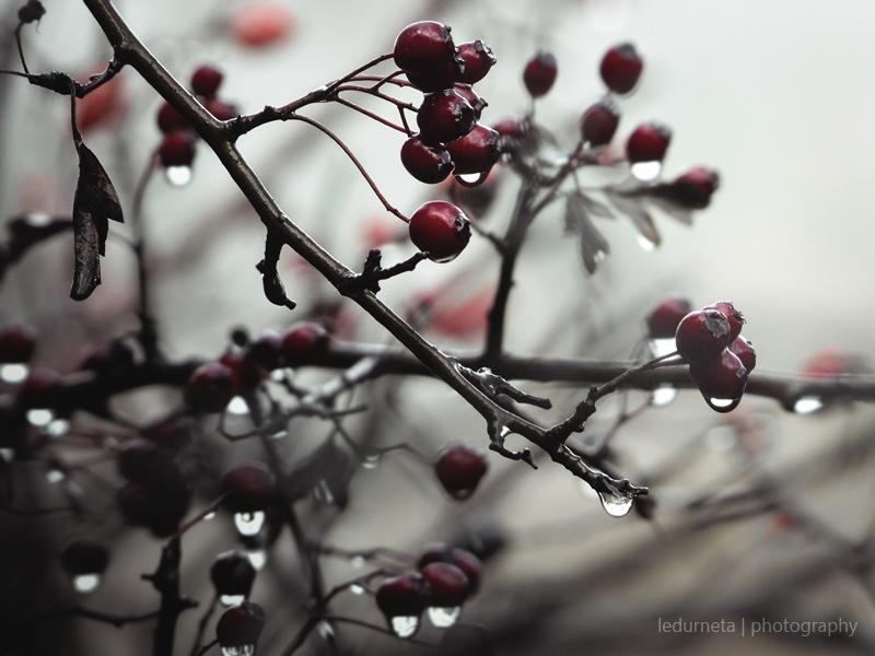 Last autumn by LedurnetaPhotography