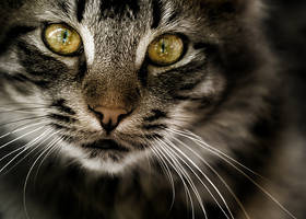 Gatto.