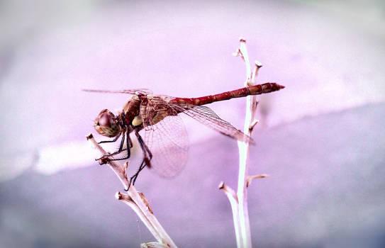 Flyawaya