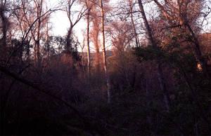 Spring Sunset at Lopez Lake
