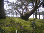 Mossy Area