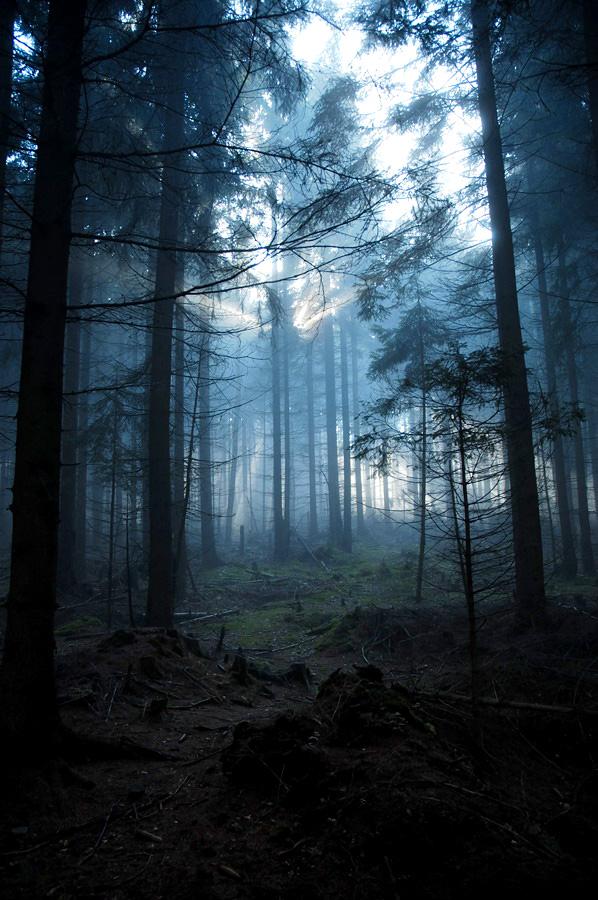 Mystical Woods by My-dynig-soul