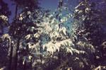 Winter by alexisdanielle