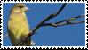 Greenfinch Stamp by NamelessFeline
